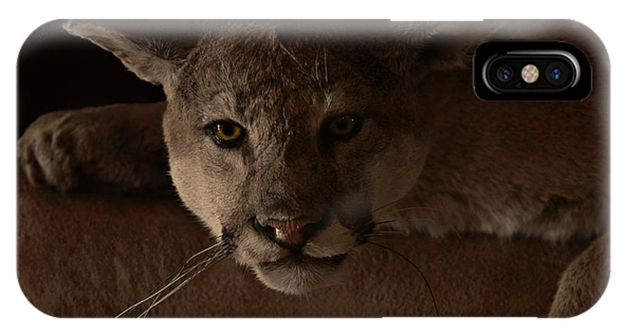 Cougar IPhone X Case featuring the photograph Mountain Lion A Large Graceful Cat by Christine Till