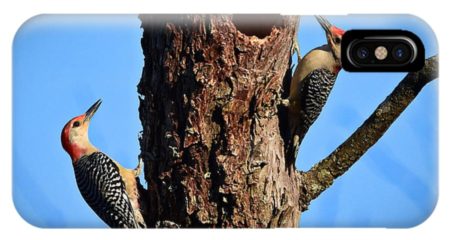 Birds IPhone X Case featuring the photograph Red Bellied Woodpeckers by Jeanette Fiveash