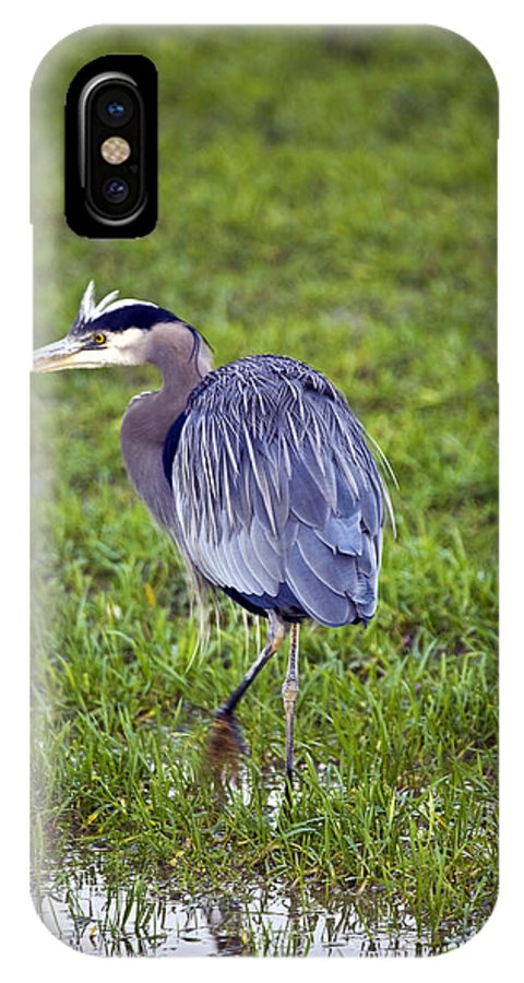 Heron IPhone X Case featuring the photograph Moving by Karen Ulvestad