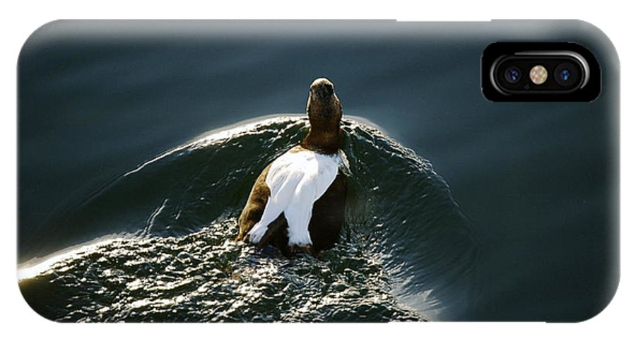 Duck IPhone X Case featuring the photograph Mr. Eider by Faith Harron Boudreau