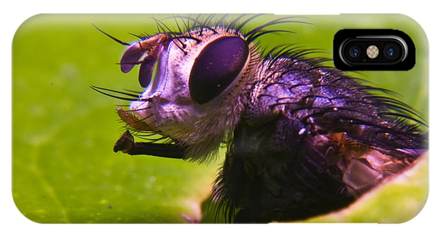 Fly IPhone X Case featuring the photograph Mr. Fly by Douglas Barnett