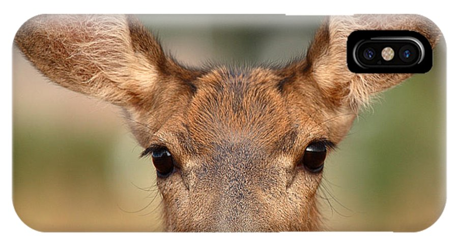 Deer IPhone Case featuring the photograph Mule Deer Being Playful by Max Allen
