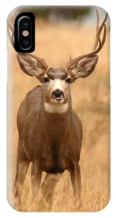 Mule Deer IPhone X Case featuring the photograph Mule Deer Buck Showing His Thoughts by Max Allen