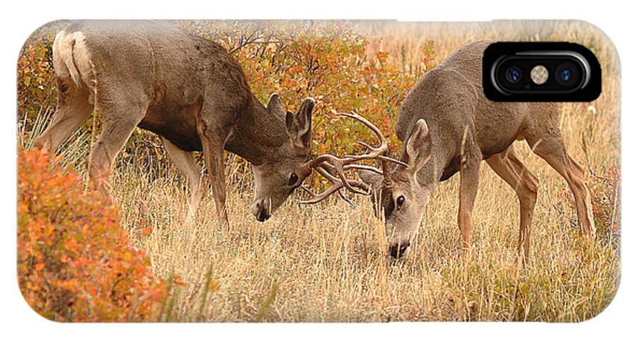 Deer IPhone X Case featuring the photograph Mule Deer Bucks In Autumn Rite Of The Rut by Max Allen