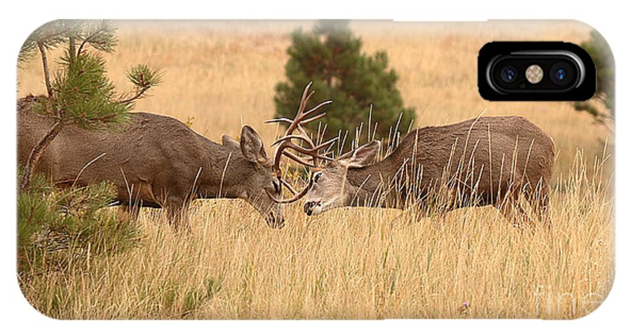 Deer IPhone X Case featuring the photograph Mule Deer Bucks Sparring In Open Pine Woodlands by Max Allen