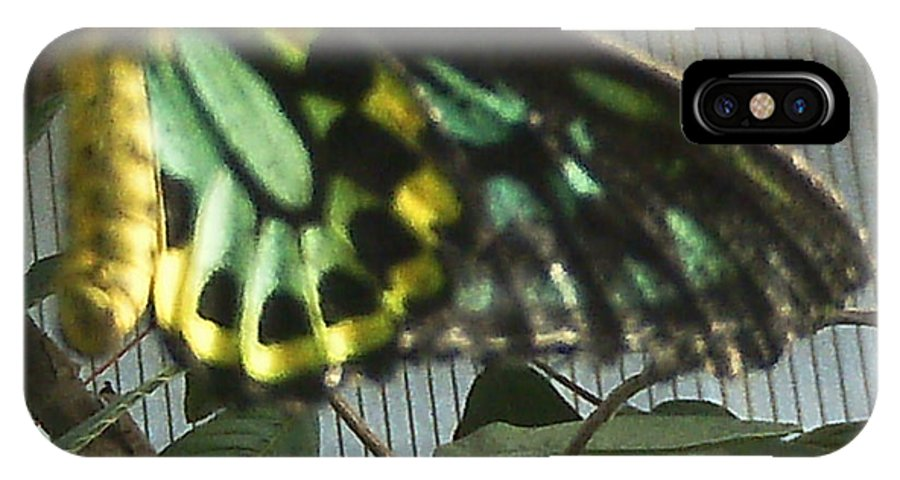 Butterfly Of Many Colors IPhone X / XS Case featuring the photograph Multi-colored Butterfly by Doris Giardini
