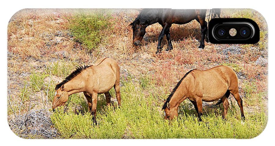 Pryor Mountain Wild Horse Range IPhone X Case featuring the photograph Mustangs by Larry Ricker