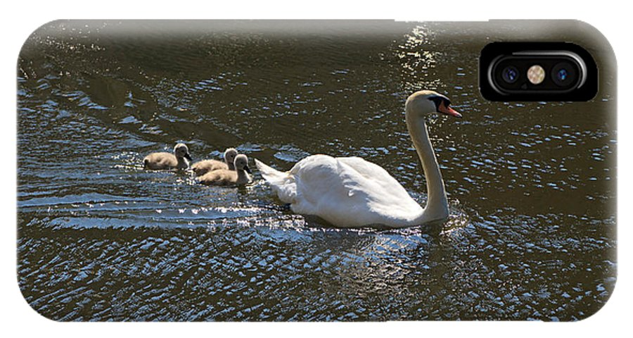 Swans IPhone X Case featuring the photograph Mute Swan With Three Cygnets Following by Louise Heusinkveld