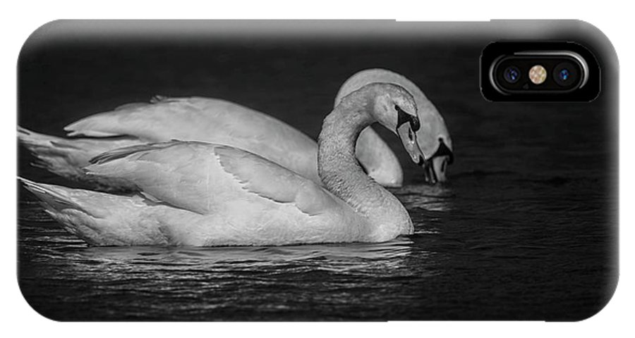 Black And White IPhone X Case featuring the photograph Mute Swans in Black and White by David Bearden