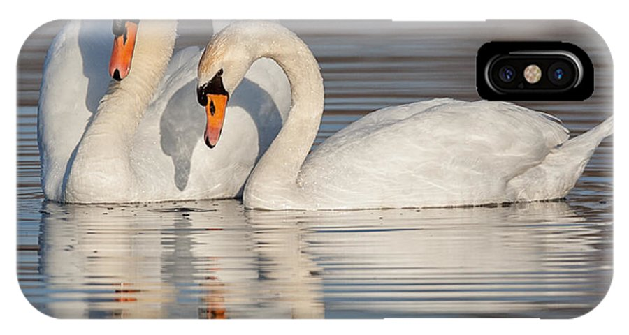 Mute Swans IPhone X Case featuring the photograph Mute Swans by Jerry Fornarotto