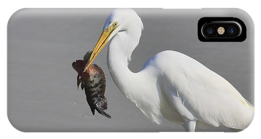 Giant Egret IPhone X Case featuring the photograph My Catch At The Beach by Deborah Benoit