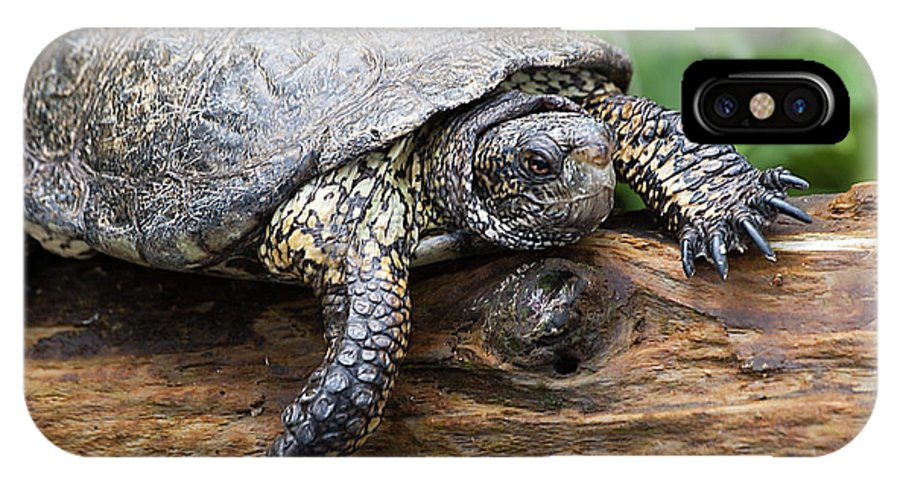 Turtle IPhone X / XS Case featuring the photograph My Log by Jay Billings