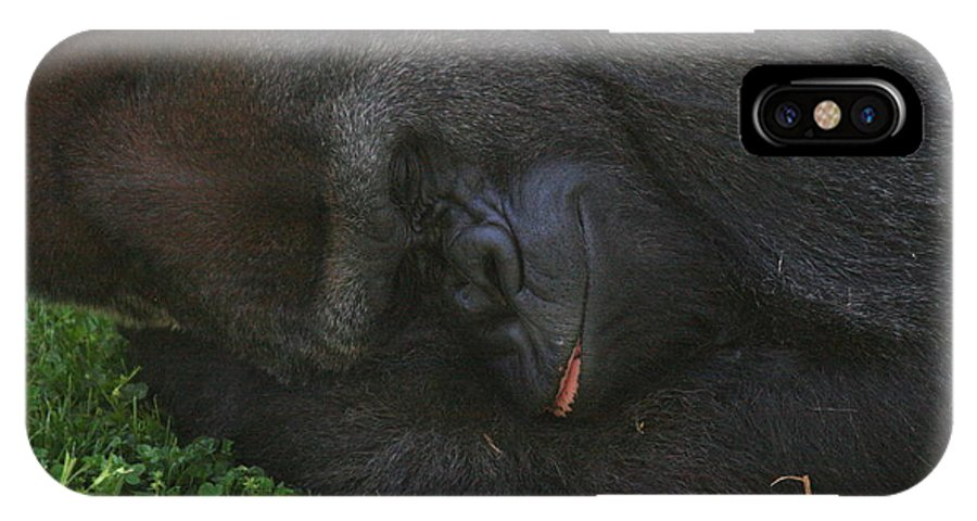 Monkey IPhone X Case featuring the photograph Nap Time For The Monkey by David Dunham
