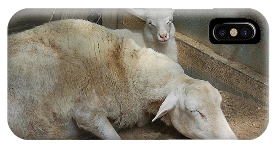 Sheep IPhone X Case featuring the photograph Nap Time by Suzanne Gaff