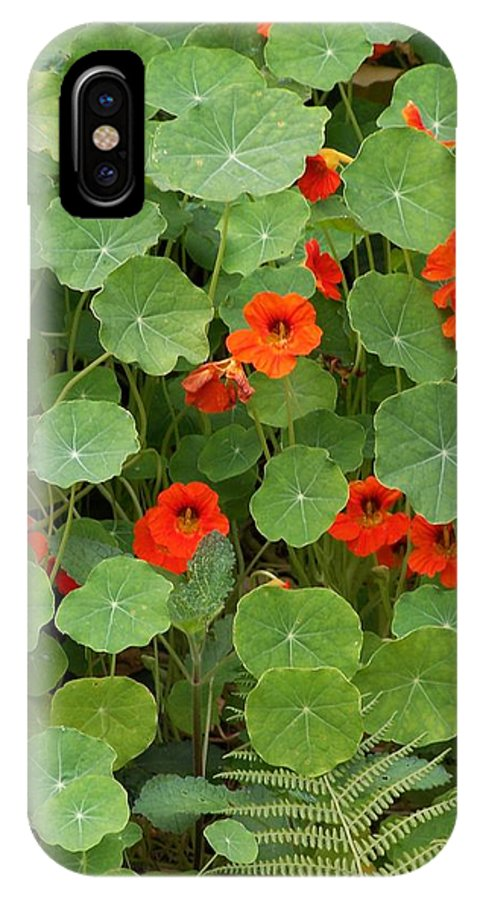 Nasturtiums IPhone Case featuring the photograph Nasturtiums by Gale Cochran-Smith