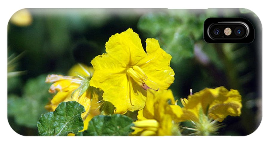 Flower IPhone X Case featuring the photograph Nasty Weed by Margaret Fortunato