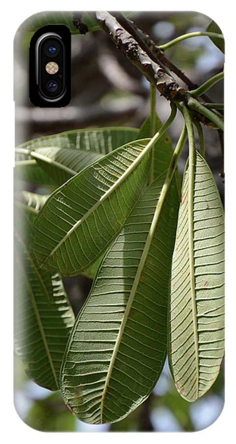 Leaf IPhone X Case featuring the photograph Natural Leaf by Gabrielle Yap