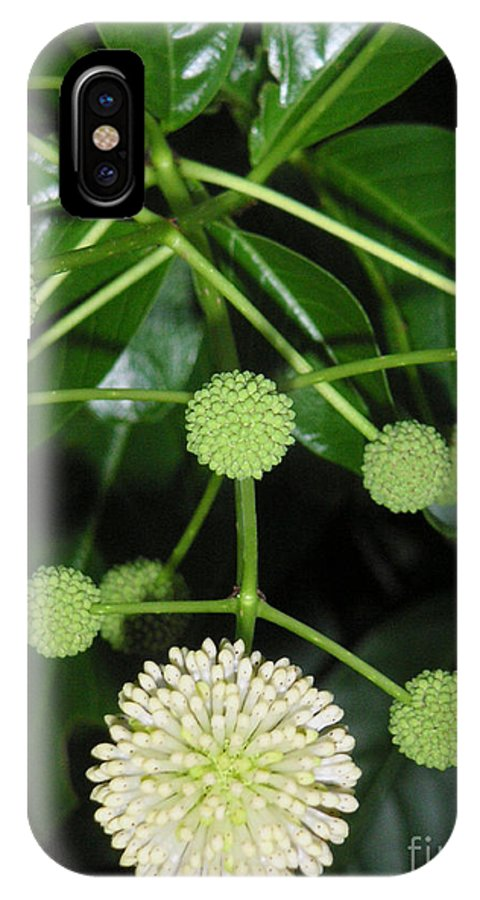 Nature IPhone Case featuring the photograph Nature In The Wild - Natural Pom Poms by Lucyna A M Green