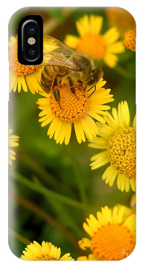 Nature IPhone X Case featuring the photograph Nature In The Wild - The Nectar Company by Lucyna A M Green
