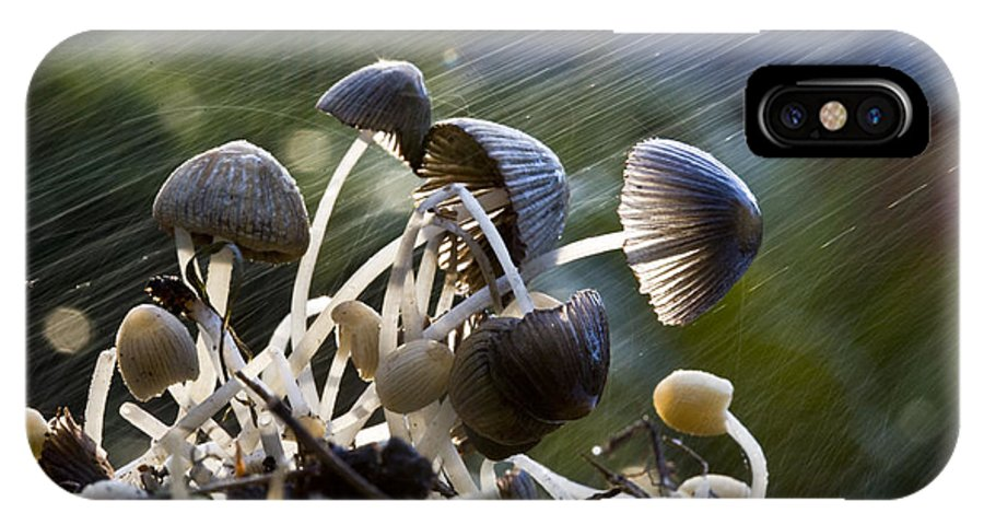 Mushrooms Rain Showers Umbrellas Nature Fungi IPhone X / XS Case featuring the photograph Nature by Sheila Smart Fine Art Photography