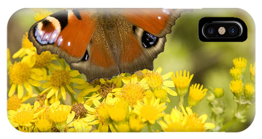 Butterfly IPhone X Case featuring the photograph Nature's Beauty by Ian Middleton