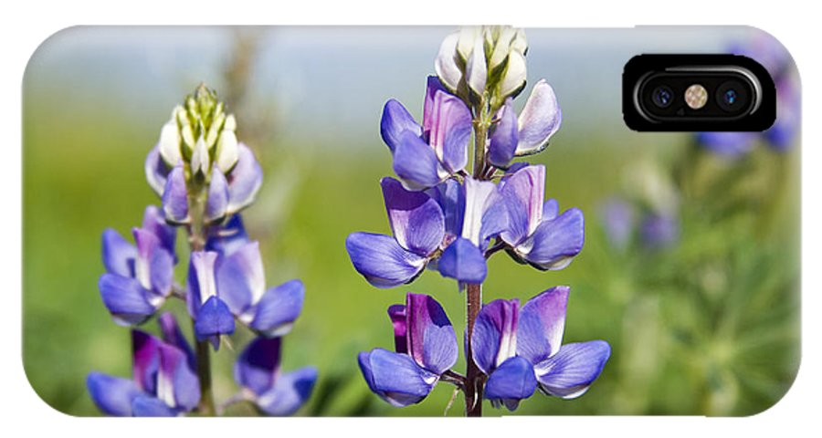 Flowers IPhone X Case featuring the photograph Natures Candy by Kelley King
