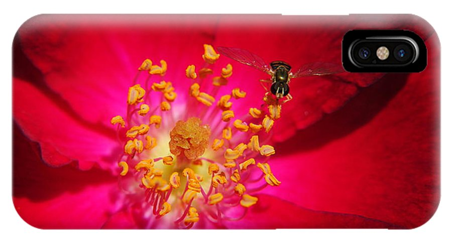 Glow IPhone X Case featuring the photograph Natures Glow by Frozen in Time Fine Art Photography