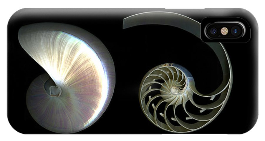 Nautilus IPhone Case featuring the photograph Nautilus Deconstructed by Christian Slanec