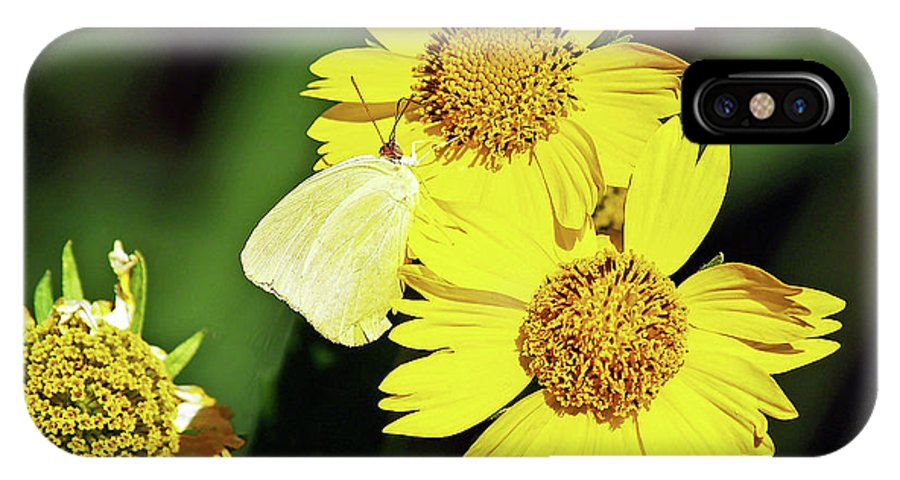 Fine Art Photography IPhone X Case featuring the photograph Nectar Seeker by Patricia Griffin Brett