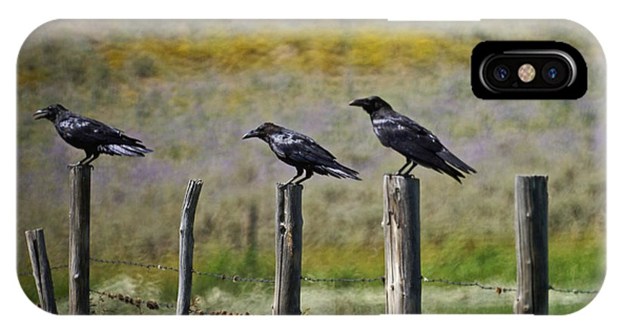 Crows IPhone X Case featuring the photograph Neighborhood Watch Crows by Heather Coen
