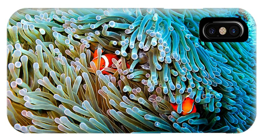 Anemonenfische IPhone X Case featuring the photograph Nemos Hiding by Joerg Lingnau