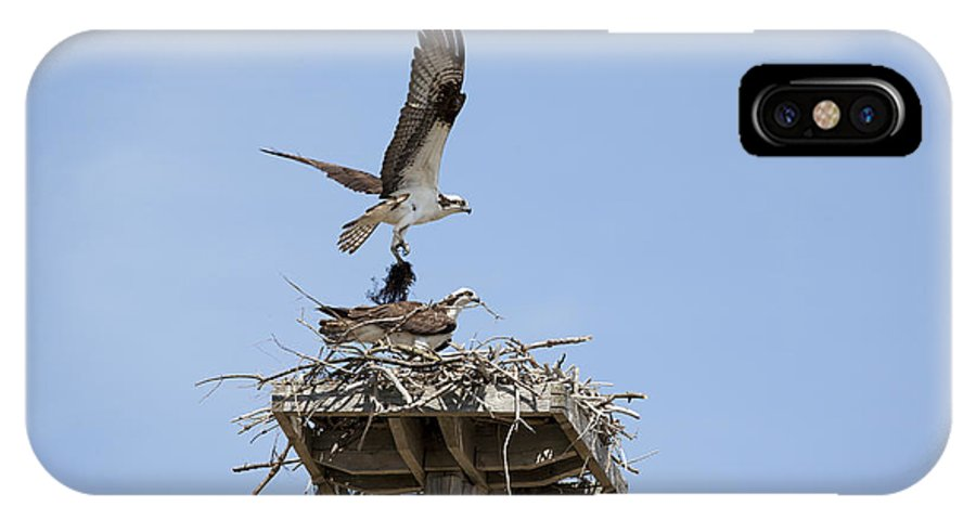 Osprey IPhone X Case featuring the photograph Nesting Osprey In New England by Erin Paul Donovan