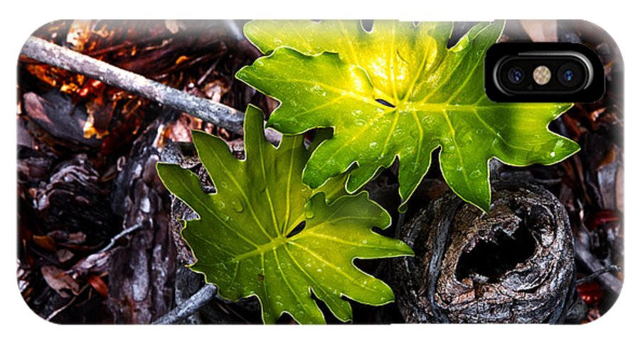 Plant IPhone X Case featuring the photograph New Growth by Christopher Holmes