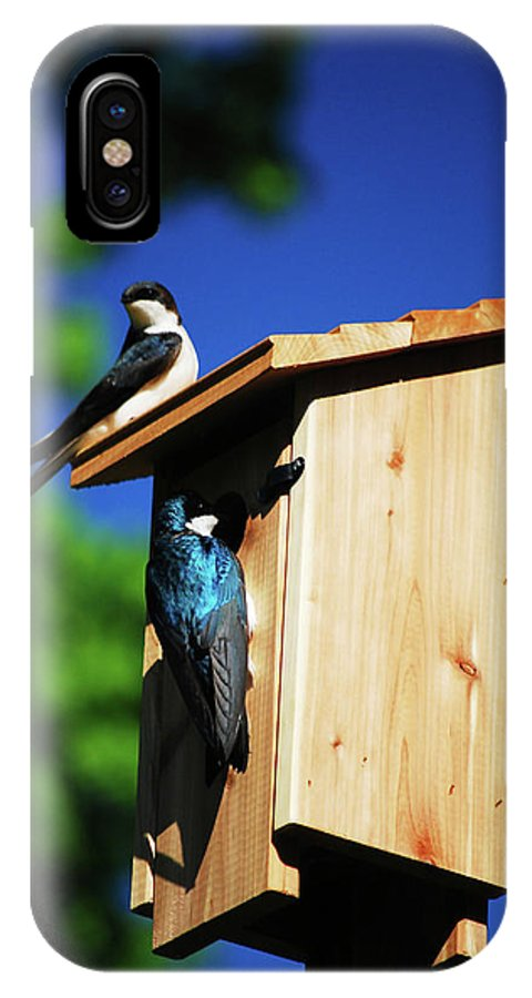 Tree Swallows IPhone X Case featuring the photograph New Home Inspection by Lori Tambakis