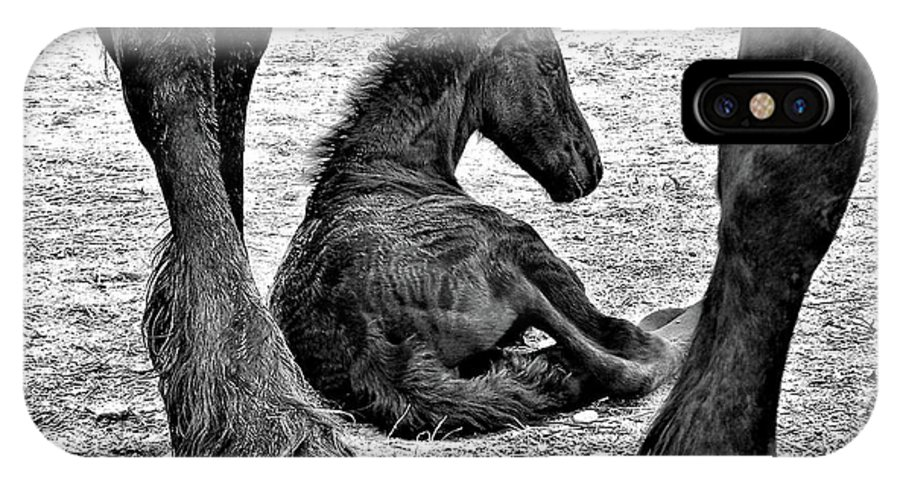 Horse IPhone X Case featuring the photograph New Life - Friesian by Nadine Lewis
