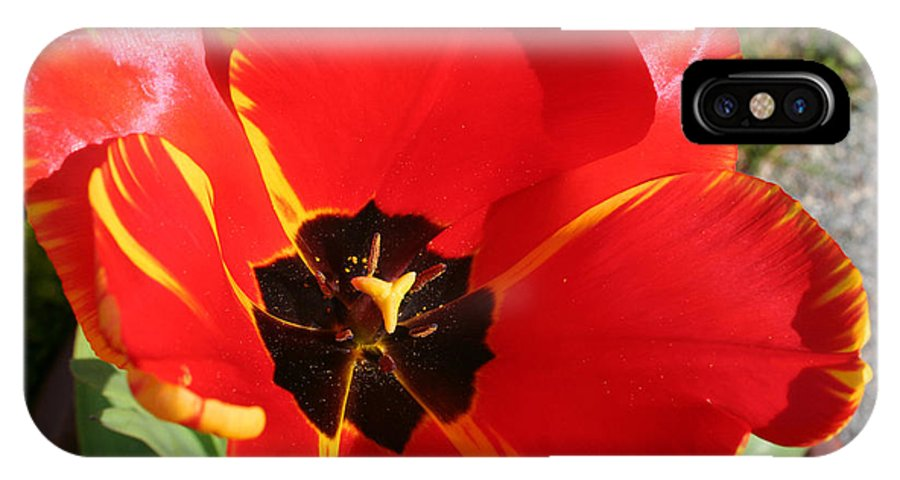 Red Tulips IPhone X Case featuring the photograph New Spring Beginnings by Mary Gaines