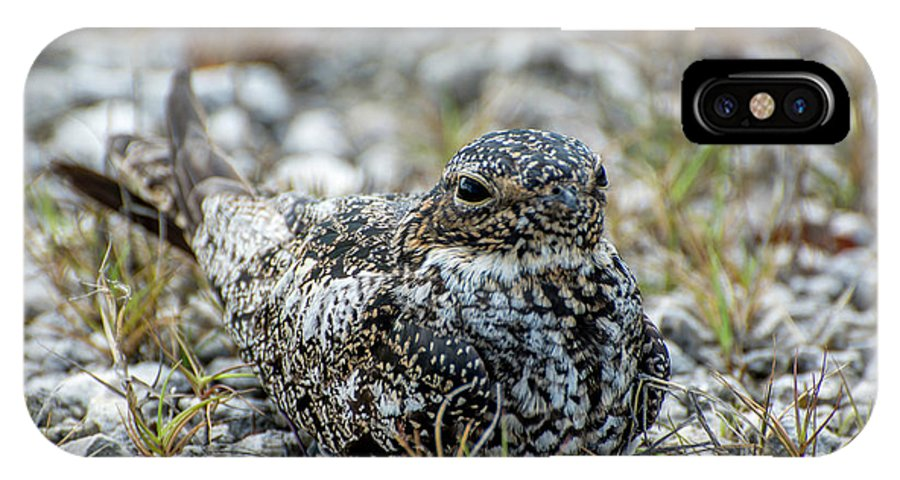 Nighthawk IPhone X Case featuring the photograph Nighthawk by Manuel Lopez