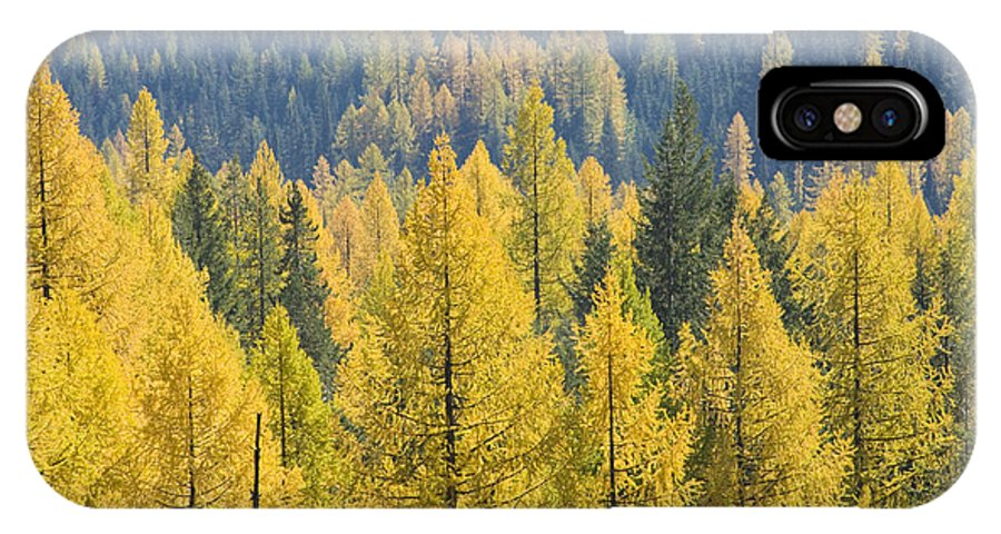 Trees IPhone X Case featuring the photograph North Idaho Gold by Idaho Scenic Images Linda Lantzy