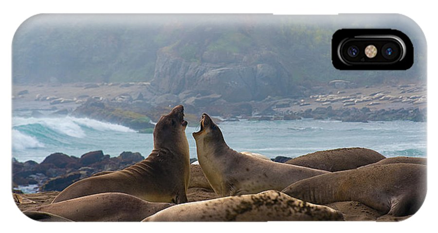 Northern Elephant Seal IPhone X Case featuring the photograph Northern Elephant Seals Mirounga Angustirostris by Eyal Nahmias