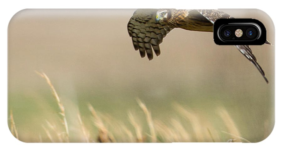 American IPhone X Case featuring the photograph Northern Harrier Hawk Skimming The Fields by Jens Lambert