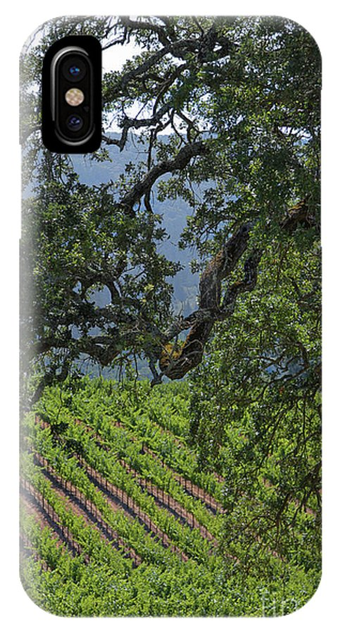 California IPhone X / XS Case featuring the photograph Oak And Vineyard by Wallybird Photography