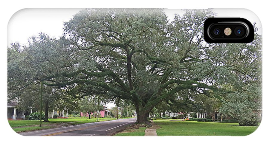 Nature IPhone X Case featuring the photograph Oak Tree Jennings Louisiana by Carl Deaville