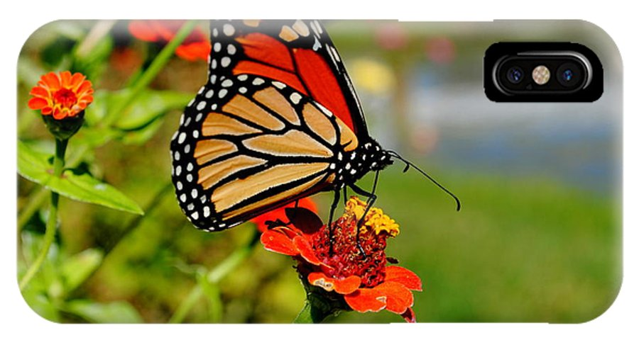 Landscape IPhone X Case featuring the photograph October Butterfly by Kimberly Dawn Hendley