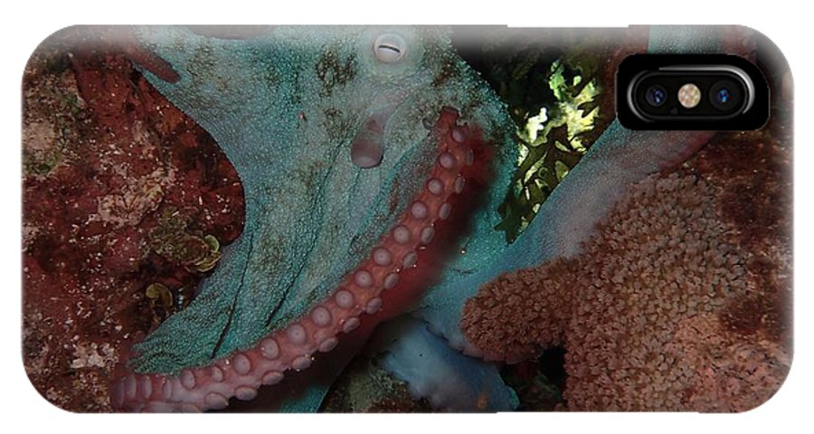 Macro Of Octopus On The Reef IPhone X / XS Case featuring the photograph Octopus On Night Dive by Nina Banks