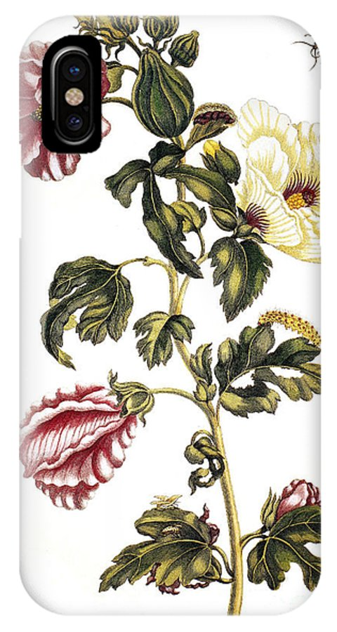 1705 IPhone X Case featuring the photograph Okra by Granger