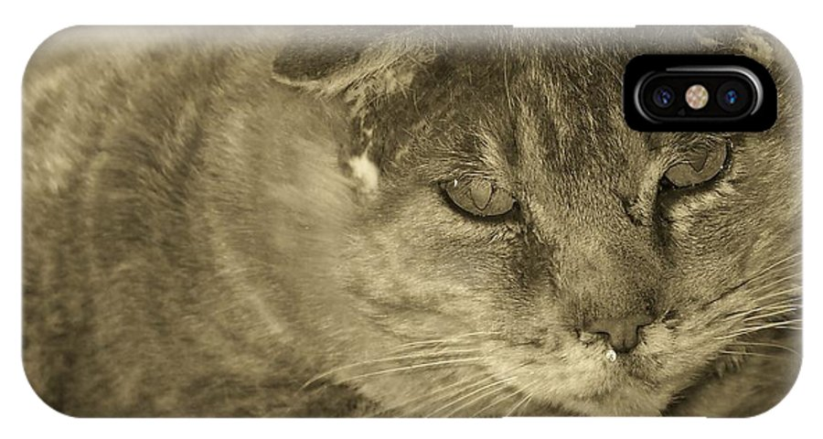 Cats IPhone X Case featuring the photograph Old Man Old Beauty Thumbody by Deborah Montana
