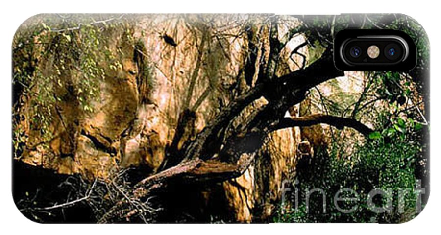 Trees IPhone X Case featuring the photograph Old Tree by Kathy McClure