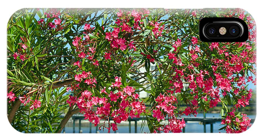Florida; Indian; River; Melbourne; Nerium; Oleander; Red; Pink; Flower; Bush; Shrub; Poison; Poisono IPhone X Case featuring the photograph Oleander On Melbourne Harbor In Florida by Allan Hughes