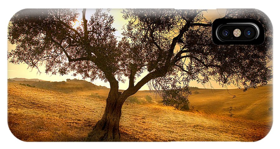 Landscape IPhone X Case featuring the photograph Olive Tree Dawn by Mal Bray