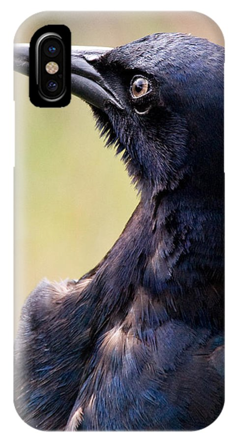 Bird IPhone X Case featuring the photograph On Alert by Christopher Holmes
